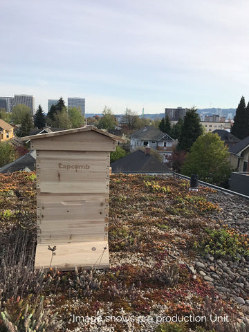 Tapcomb six frame hive on roof, Tapcomb honey flow hive, urban beekeeping