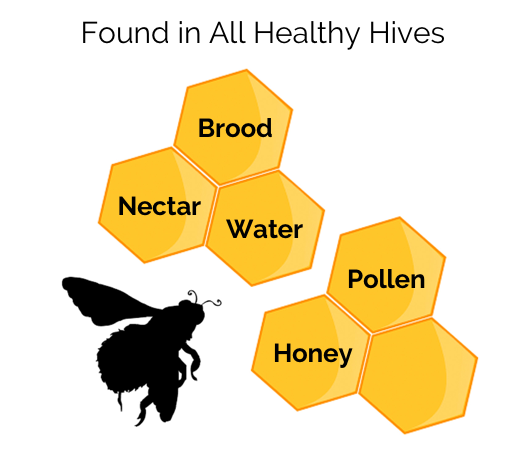 What is found in a hive cell