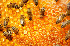 honey filled comb, 3 Things You Need to Know Before Buying a Beehive