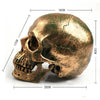Image of Decorative Human Skull Life Size 1:1 Model
