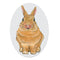 Hunny Bunny Clear Window Decal