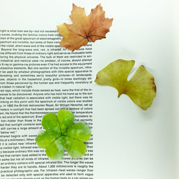 Painted Leaf Sticky Notes shown on open book