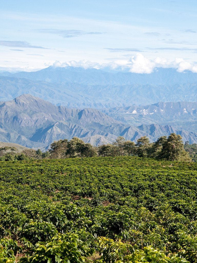 A coffee plantation in Colombia. La Sierra Craft Coffee Roasters works with select farmers who handpick the coffee. Later the coffee is craft roasted to perfection. All La Sierra coffees are single origin coffees from Colombia.