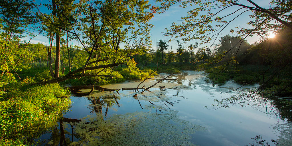 parc national Laurentides: Parc national d'Oka