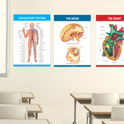 15 Extra Large Anatomy Posters for Classroom, Office Decorations and Home 26x17 inch (Pack of 15)