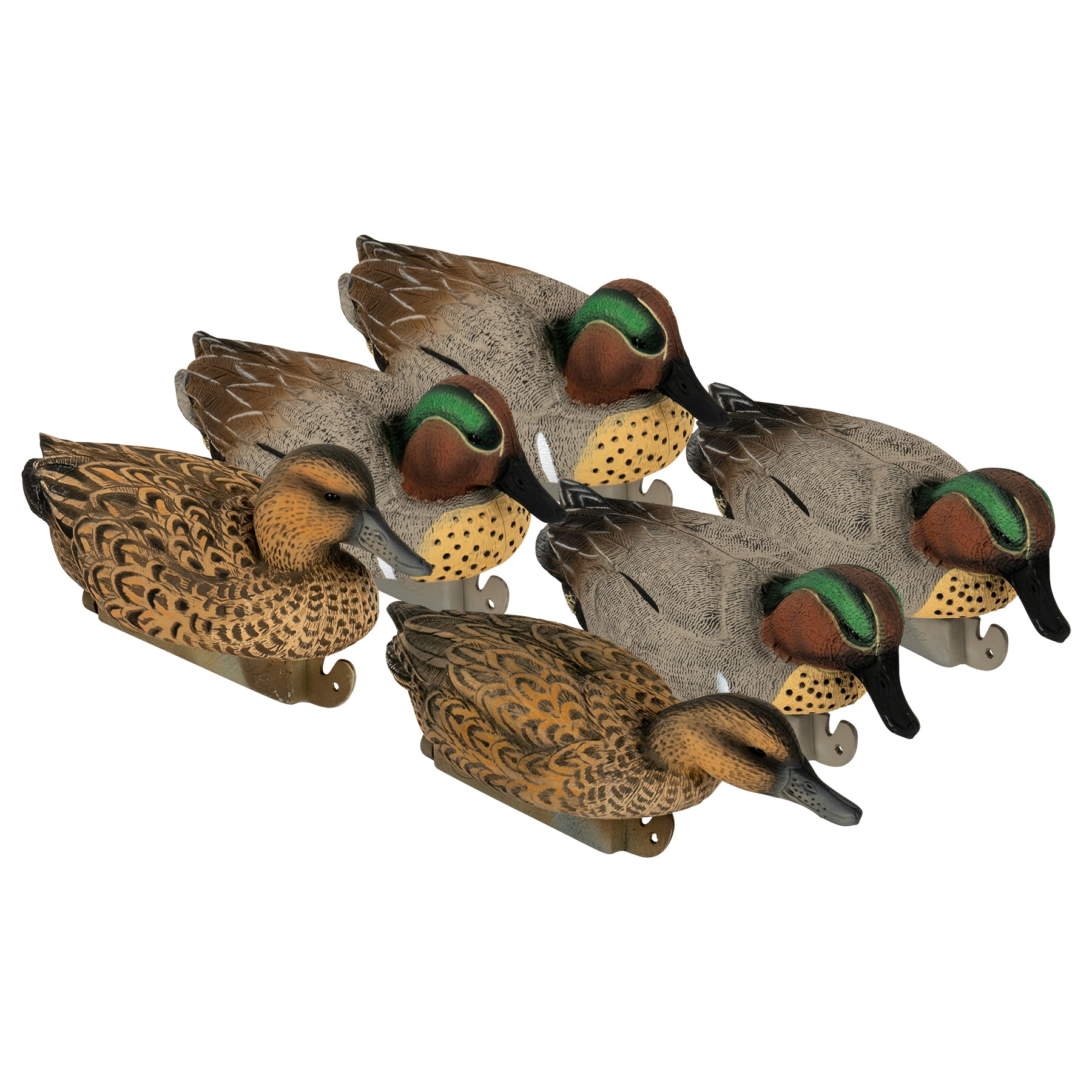 Flight Green Wing Teal