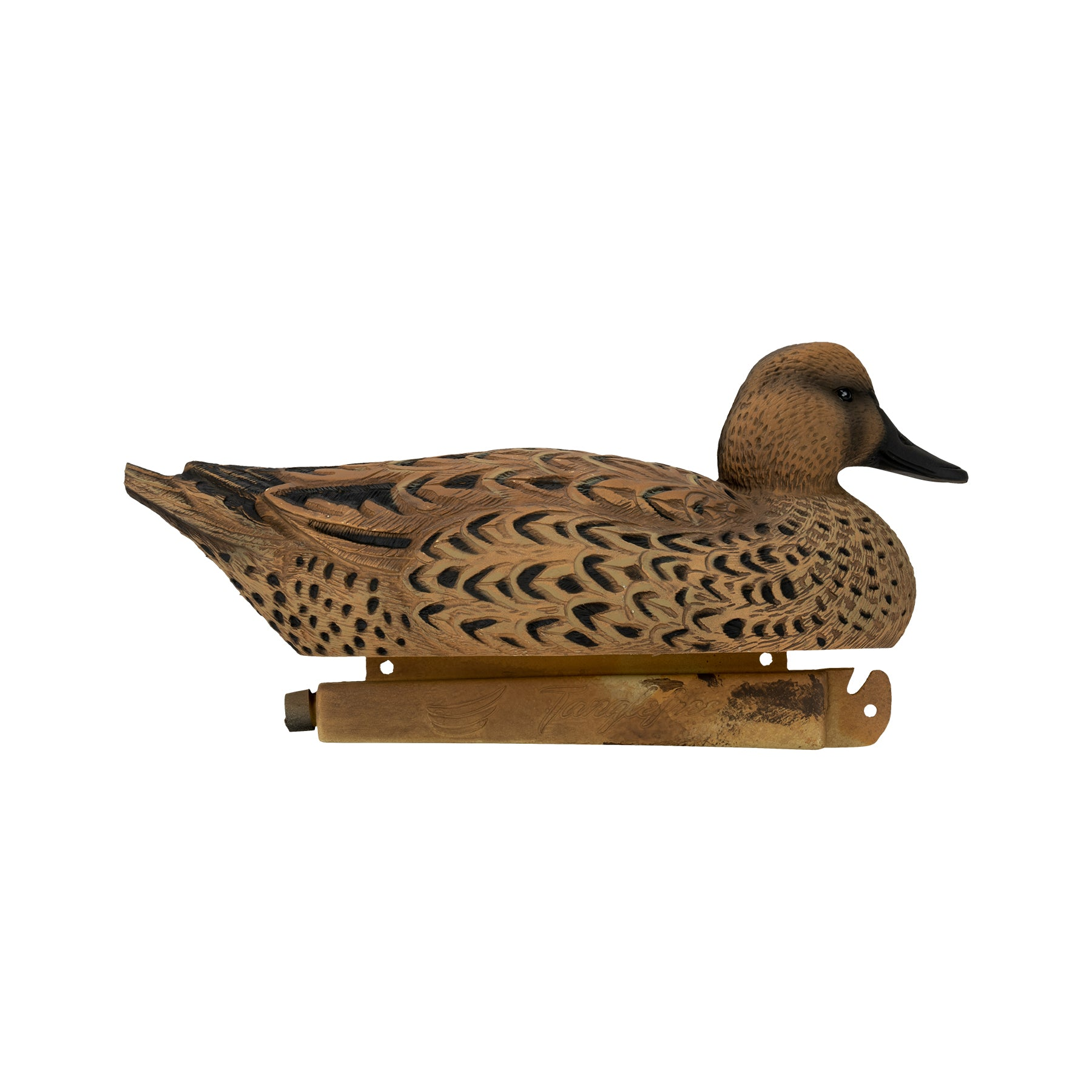 Flight Flocked Pintail