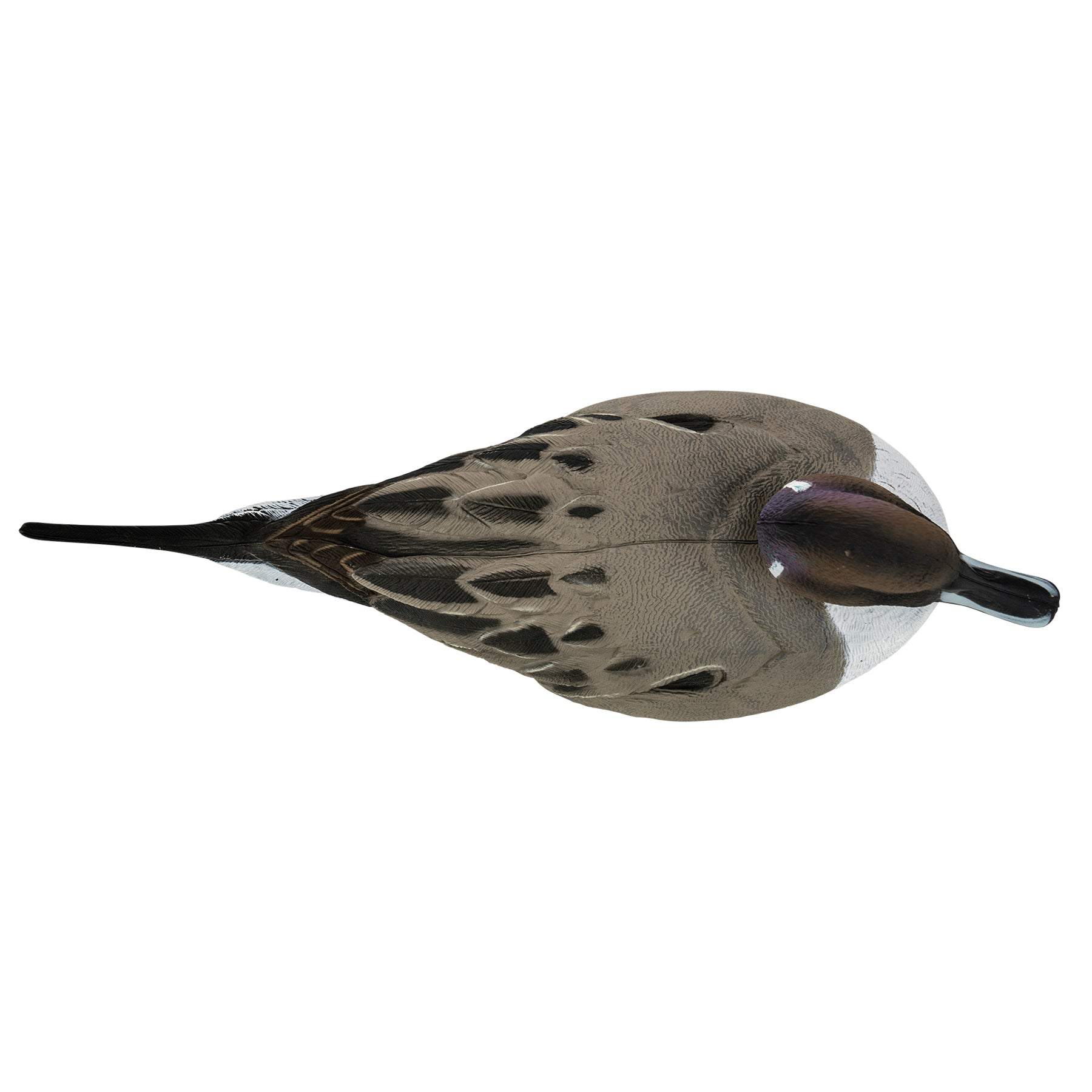 Flight Pintail