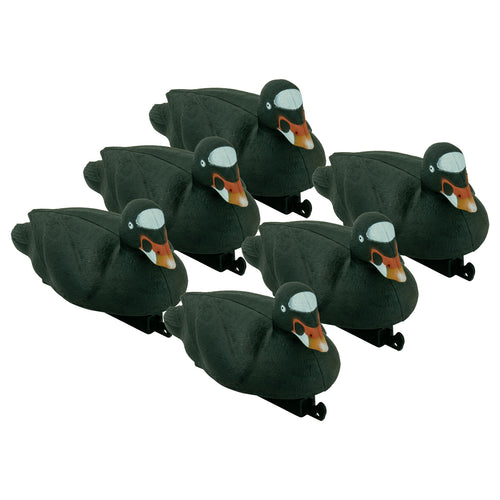 Migration Edition Surf Scoter