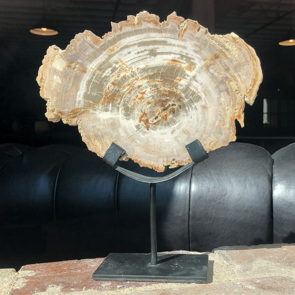 Petrified Wood on Iron Stand_Royal Circus