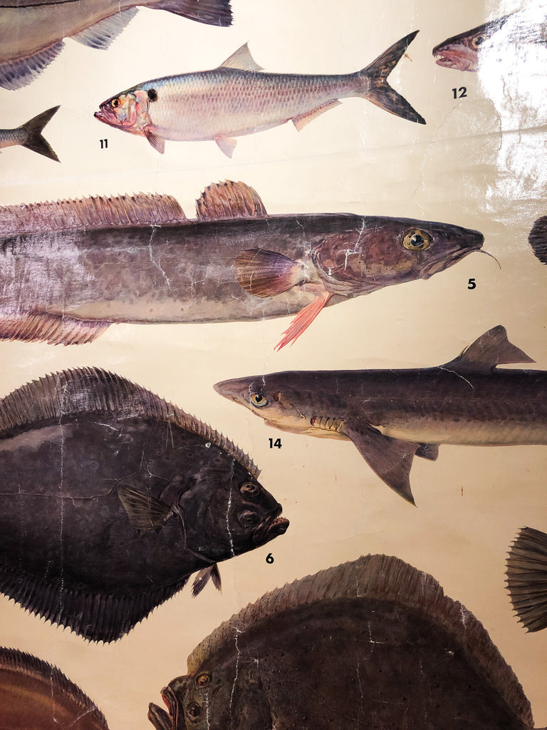 Fish Wall Chart_Royal Circus