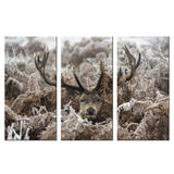 Deer Canvas - My Home Wall