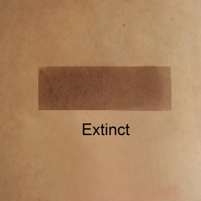 Extinct - Dark Brown Matte Eye Shadow