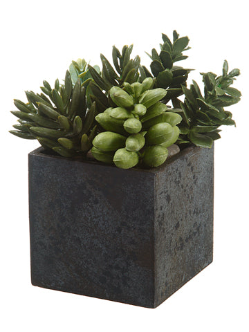 Beautiful Square Succulent Garden in a square black/grey paper cache pot.  We love this accent for any shelf or coffee table.  Can even be used outdoors!