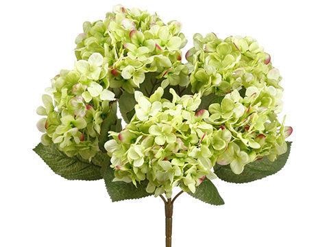 These are incredible green hydrangea stems made from silk.  There are 5 flowers per stem that makes them bushy and beautiful in any vase or pitcher.