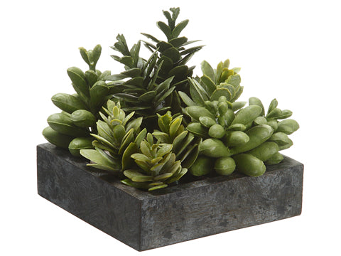 "This 5 x 5 "" succulent garden is just the pop of greenery perfect for any coffee table or shelf!"