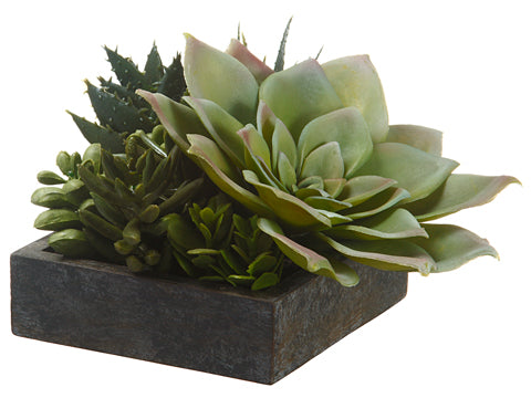 "A gorgeous little garden of succulents.  Beautiful on a coffee table, on a shelf, or resting on top of books.    4""Hx5""Wx5""L"