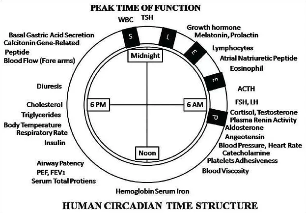 Light, Hormones and Peptides - Its All About Timing – BLUblox