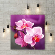 Diamond Painting - Blumen in Rosa Orchideen