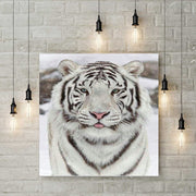 Diamond Painting - Weißer Tiger