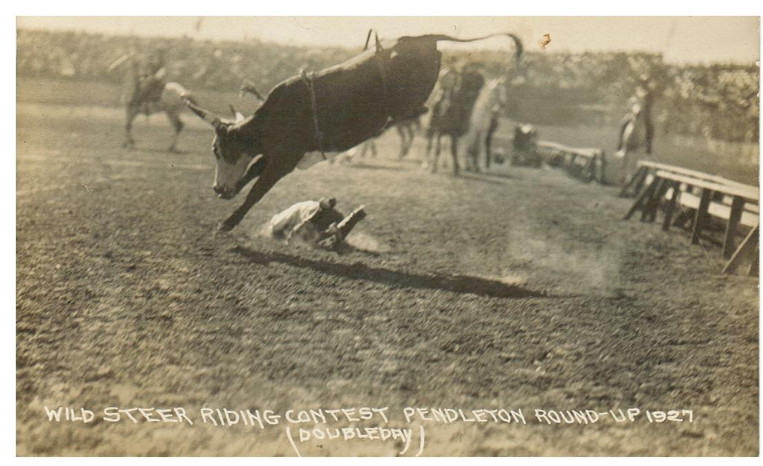 "STAMPEDE RODEO PENDLETON OREGON VINTAGE REAL PHOTO POSTCARD ""WILD STEER RIDING CONTEST ROUNDUP 1927"""