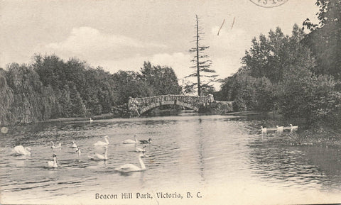 Victoria, British Columbia. Swans In Beacon Hill Park. Chapman Canada Postcard