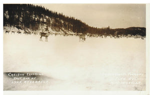 AB. LAKE ATHABASCA. RPPC. EAST END. DEER. (SUTHERLAND'S PHARMACY, A. N. WHEELER PHOTO).