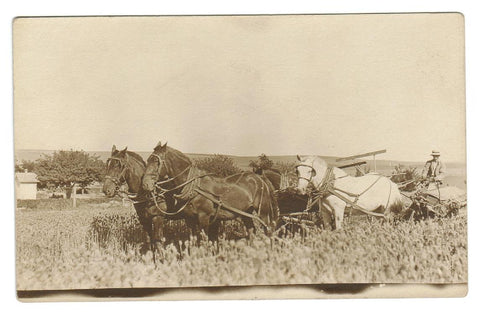 VINTAGE FARMING  REAL PHOTO POSTCARD  HORSE TEAM  PLOWING THE FIELDS.