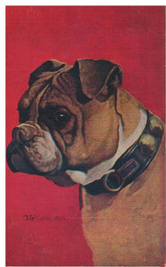 BULLDOG.   ARTIST:  J.G. LOW.   COPYRIGHT 1906. BY  M.T. SHEAHAN, BOSTON MASS 1906