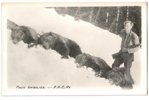 PACIFIC GREAT EASTERN RAILWAY INCORPORATED 1912 BC. FOUR GRIZZLY SHOT RPPC POSTCARD CANADA