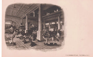 "TAXIDERMY ""A CORNER IN THE MUSEUM BC. (VICTORIA) 1900'S T.N. HIBBEN PUBLISHER POSTCARD CANADA"