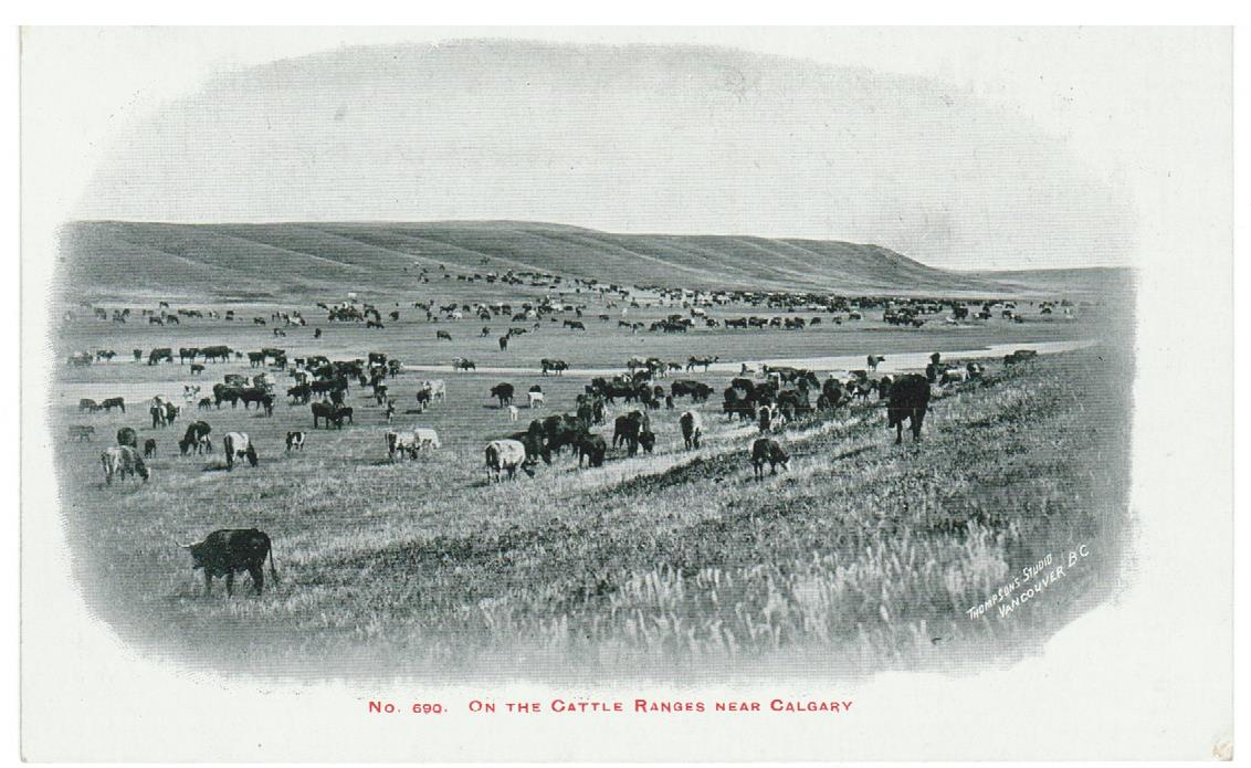 ALBERTA ON THE CATTLE RANGES NEAR CALGARY.THOMPSON STUDIO #690