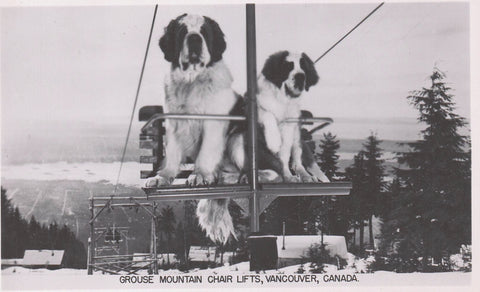DOGS RPPC POSTCARD ON CHAIR LIFT GROUSE MOUNTAIN VANCOUVER BRITISH COLUMBIA BC. CANADA