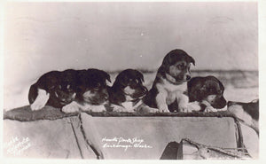 ALASKA MALAMUTE PUPPIES (DOG) RPPC POSTCARD ALASKA PHOTO BY HEWITTE ANCORAGE
