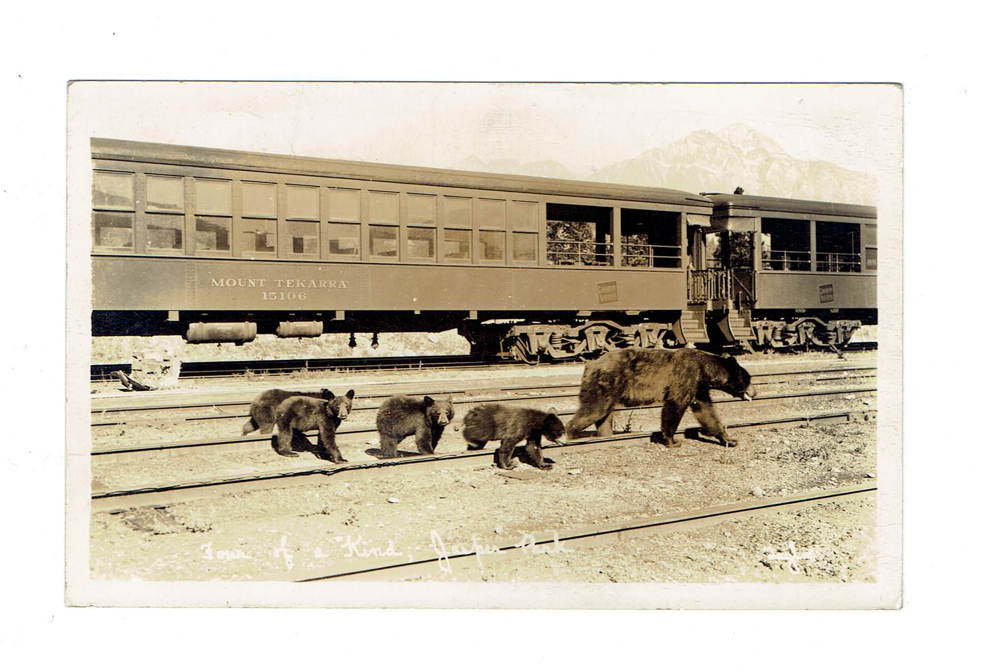 "Jasper, AB. RPPC Postcard. Bear Cubs With Mother. ""Four Of A Kind"". Canada"