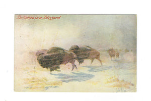 "Artist Signed Postcard. John Innes. ""Buffaloes In A Blizzard"""