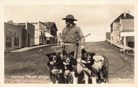 Yukon Pack Dogs With Owner. Canada RPPC Postcard