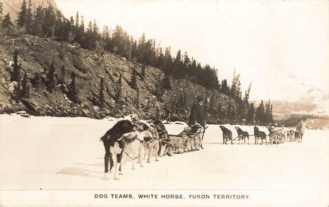 Whitehorse, YT. Dog Team With Sled. Canada Postcard