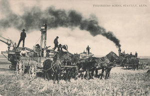 Stavely, AB. 1900's. Threshing Scene. Canada Postcard