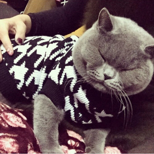 Classic Houndstooth Sweater For Small Cat Sweater Pet Jumper Coat Puppy Cat Clothes Ragdoll Canadian Hairless British Shorthair - icollectstore