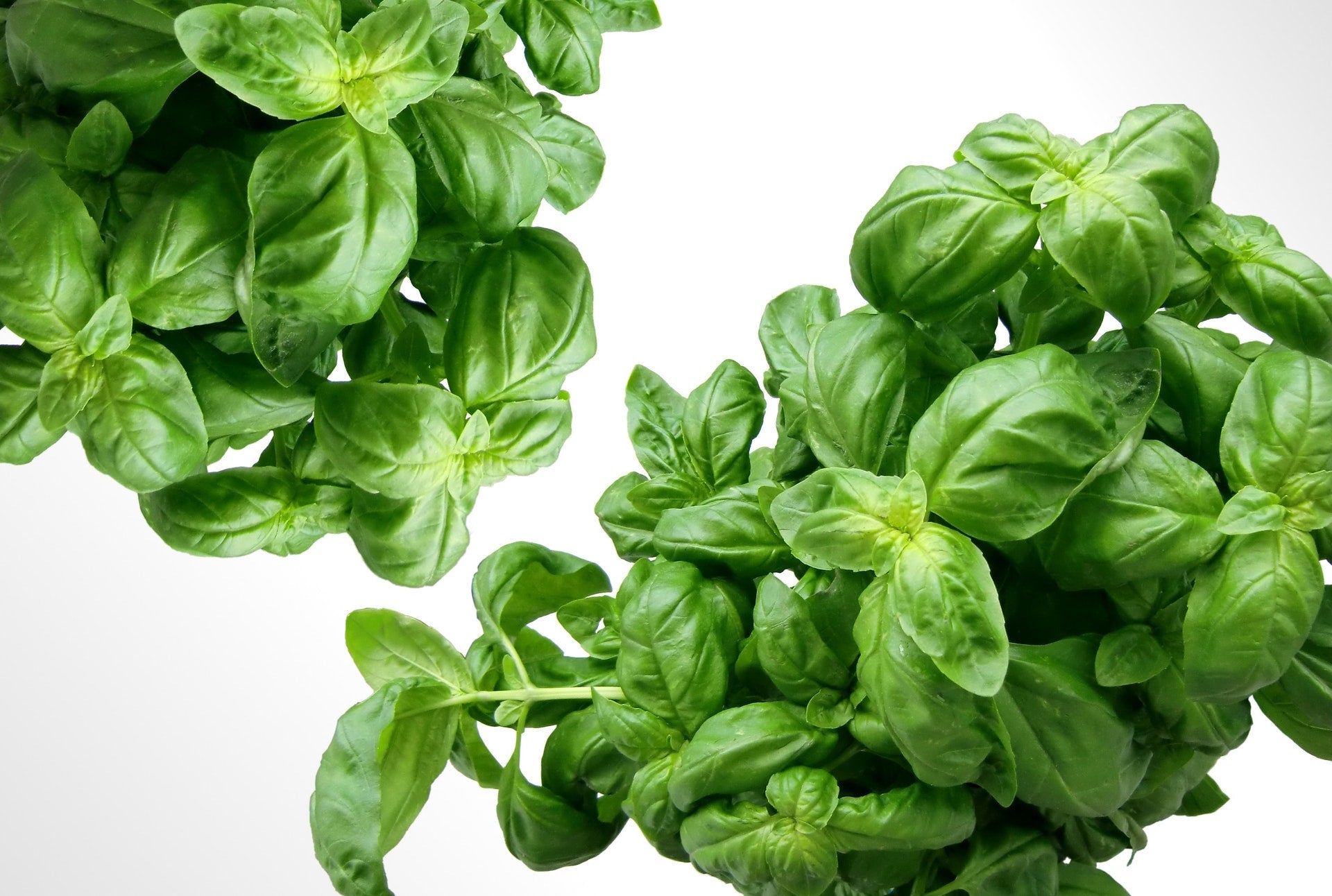 Essential Italian Herbs for the Perfect Pasta