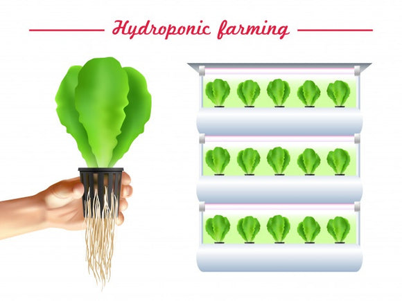 Hydroponics/Sprouting