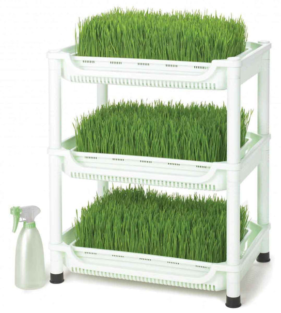 Wheatgrass trays