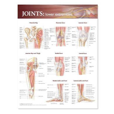 Joints of the Lower Extremities Anatomical Poster Joint Care Mountainside-Healthcare.com