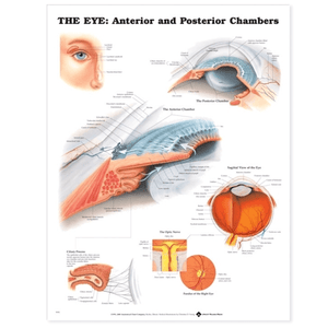 Buy The Eye Anterior and Posterior Chambers Poster online used to treat Eyes - Medical Conditions