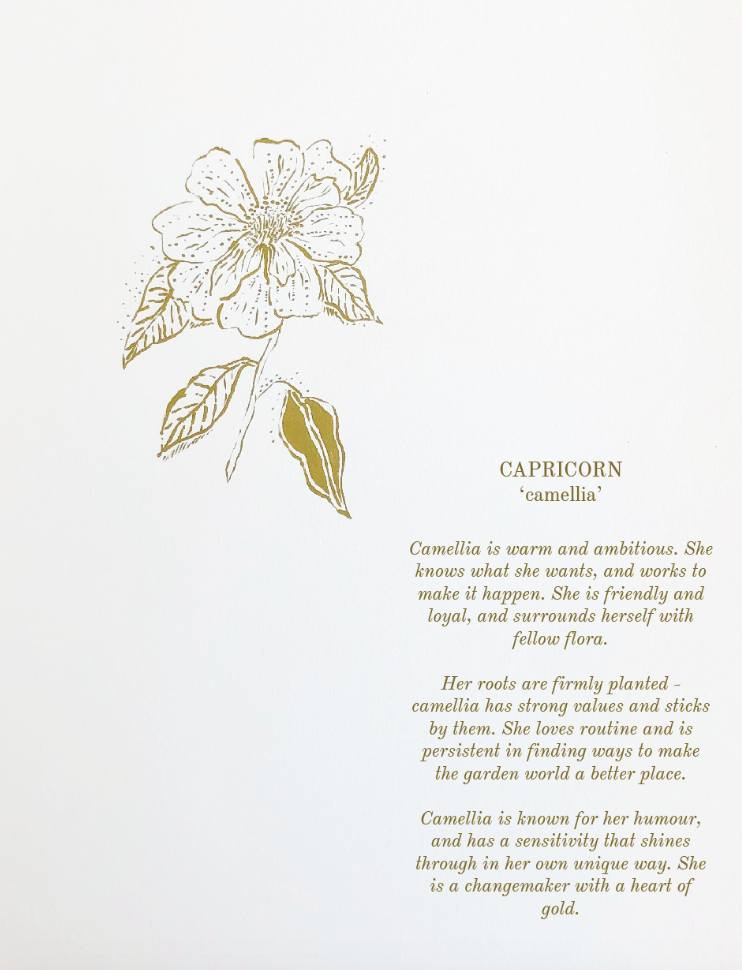 'Capricorn ~ Camellia' (Digital .pdf) // Botanical Starsign Series