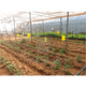 products/InstaAgro_-_Colly_Cartela_Amarela_8_943.png