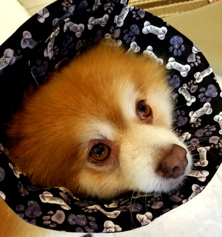 Soft Comfortable Cone E-Collar for Dogs and Cats