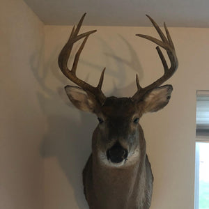 Huge 10 Point Buck Taken Using Buck Baits ATA Approved Urine