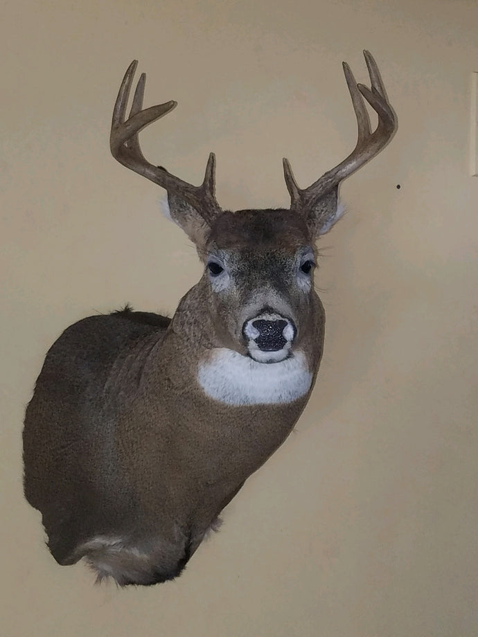 Big Buck in Michigan!   Using ATA approved urine